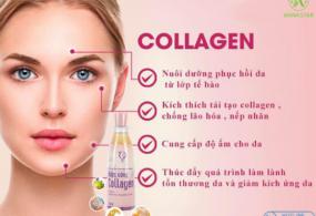 Nên bổ sung collagen từ độ tuổi nào? Loại collagen đang được ưa chuộng nhất hiện nay.
